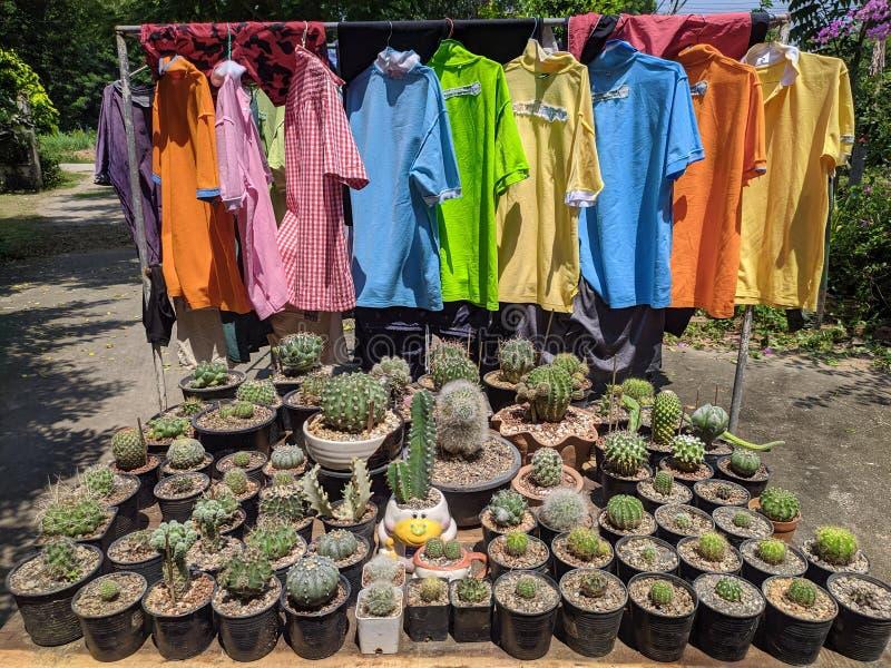 Jardín de cactus en Tailandia flores de color agua desierto y camisas coloridas foto de archivo libre de regalías