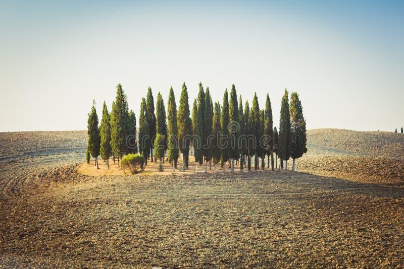 Jardín de Cypress en una colina entre campos rodantes vacíos en Toscana imágenes de archivo libres de regalías