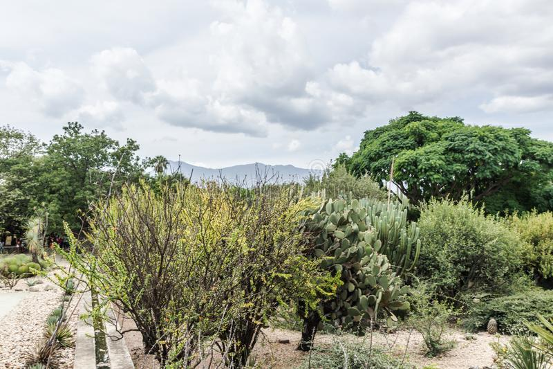 Jardín de Ethnobotanic en Oaxaca México imagenes de archivo