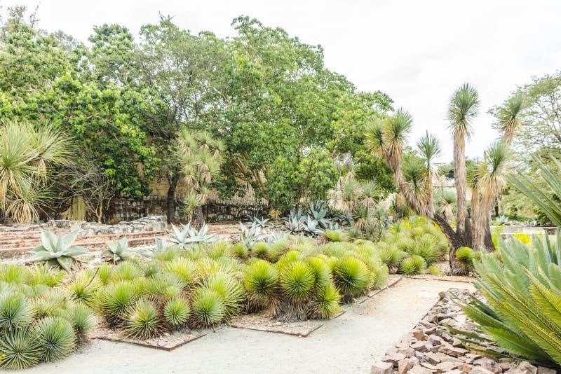 Jardín de Ethnobotanic en Oaxaca México fotos de archivo libres de regalías