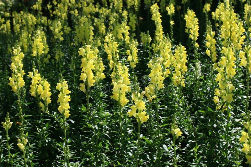 Jardín de flor imagen de archivo libre de regalías