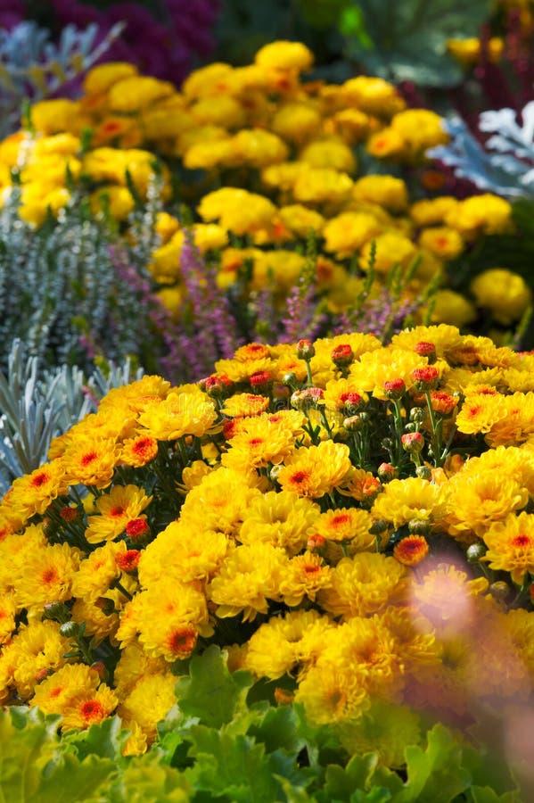 Jardín de flor fotografía de archivo