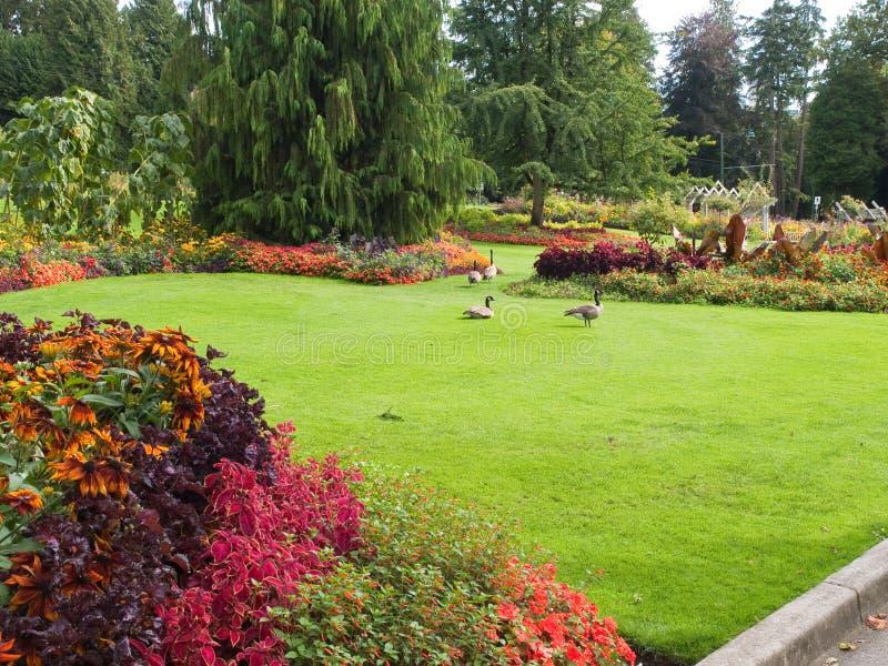 Jardín de flor con los gansos en césped imagen de archivo