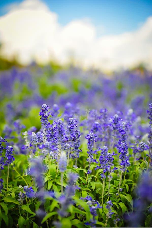 Jardín de flores fotografía de archivo