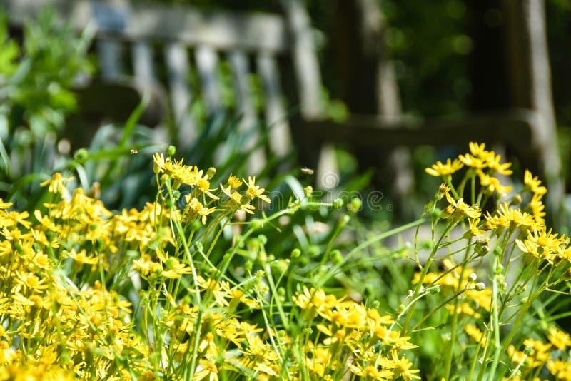 Jardín de flores amarillas con el banco imágenes de archivo libres de regalías