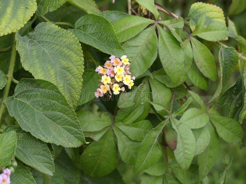 Jardín de flores amarillo imágenes de archivo libres de regalías