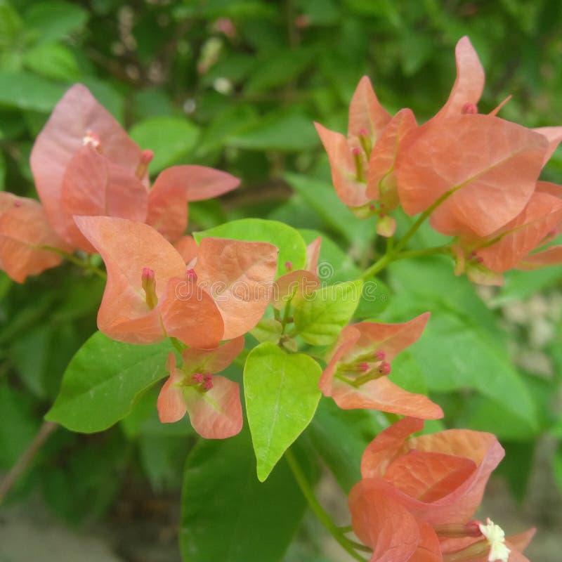 jardín de flores cariñoso de la naturaleza loca fotos de archivo libres de regalías