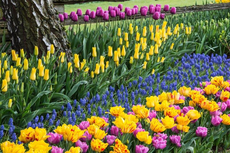 Jardín de flores colorido de la primavera fotografía de archivo libre de regalías