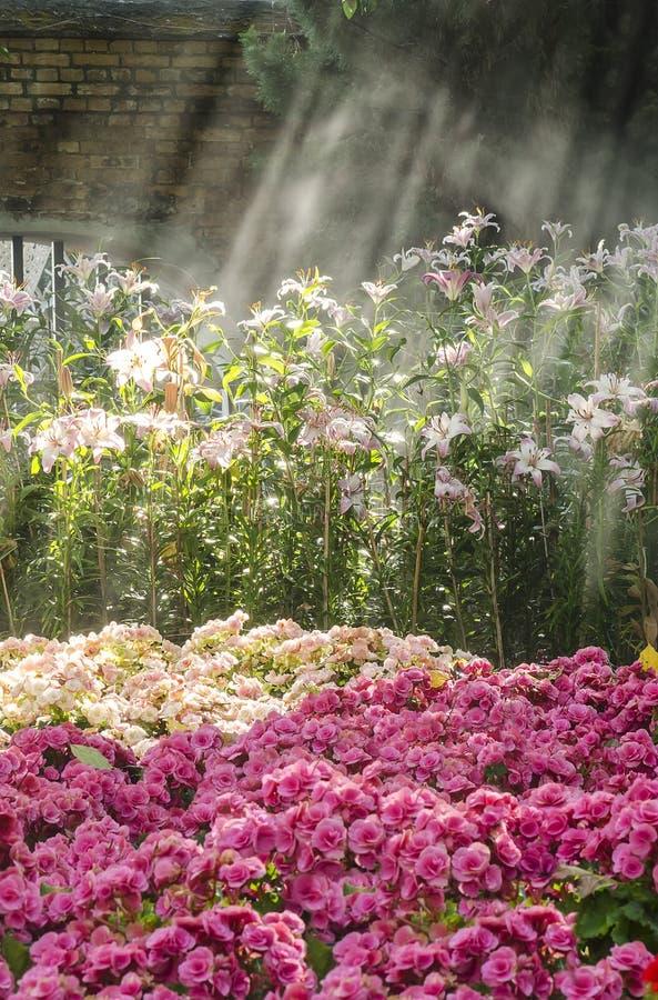Jardín de flores con luz del sol imagen de archivo libre de regalías