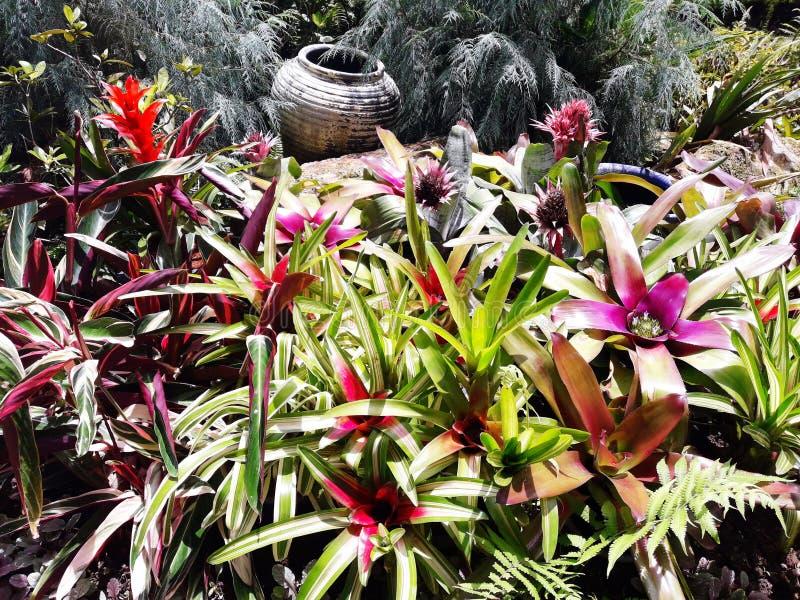 Jardín de flores en Chiang Mai, Tailandia imagen de archivo