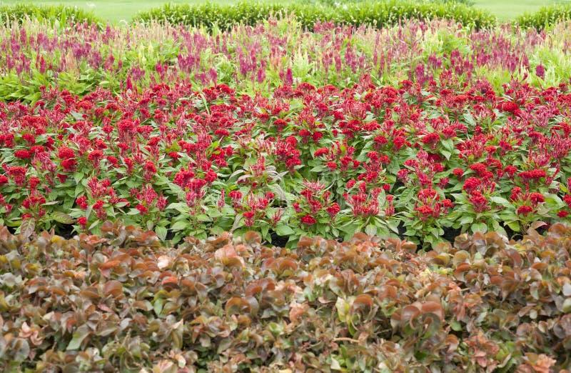 Jardín de flores en verano foto de archivo libre de regalías