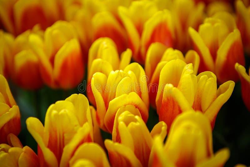 Jardín de flores hermoso con las flores florecientes coloridas foto de archivo libre de regalías