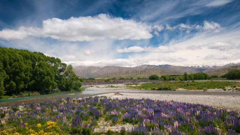 Jardín de flores, isla del sur, Nueva Zelanda fotografía de archivo libre de regalías
