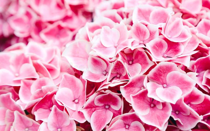 Jardín de flores de la hortensia en Hakozakigu imagenes de archivo