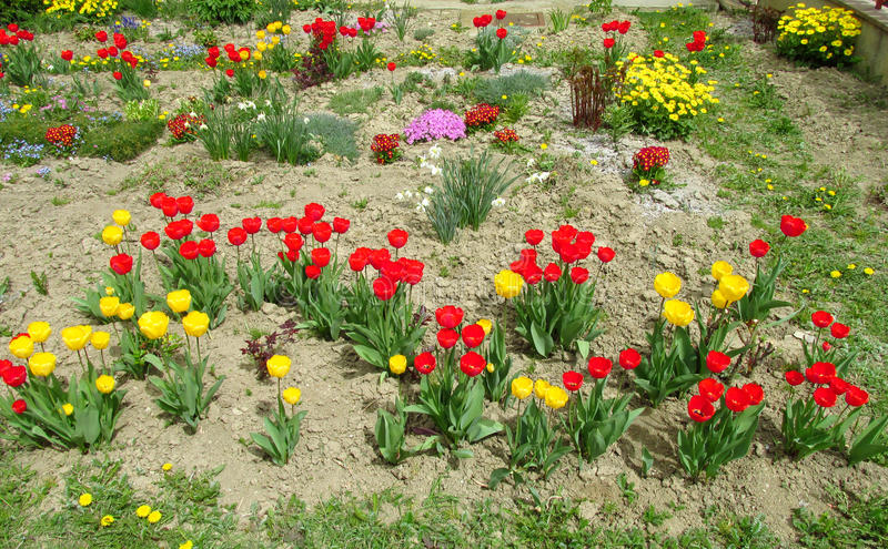 Jardín de flores rojo y amarillo del tulipán imagen de archivo libre de regalías