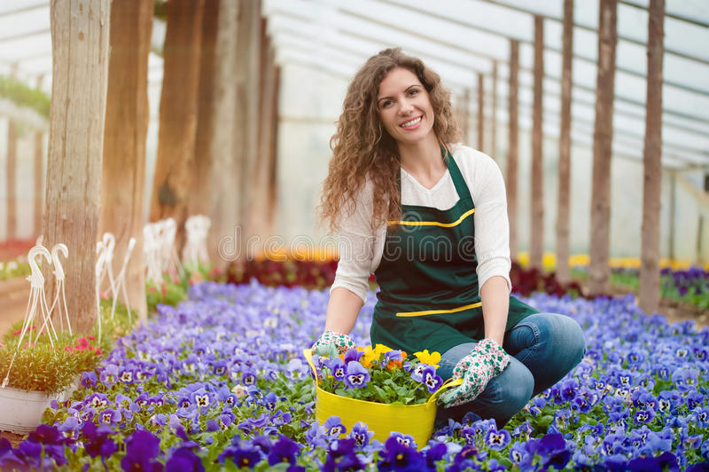 jardín de flores violeta fotografía de archivo libre de regalías