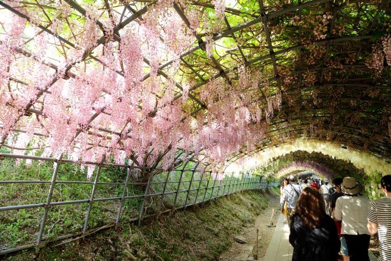 Jardín de Kawashi Fuji fotografía de archivo