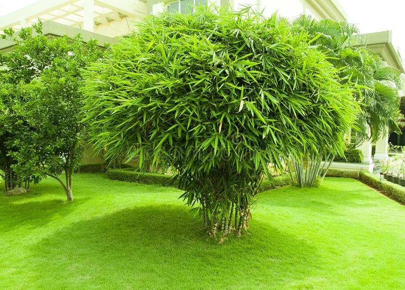Jardín de la planta de bambú y de la hierba verde imágenes de archivo libres de regalías