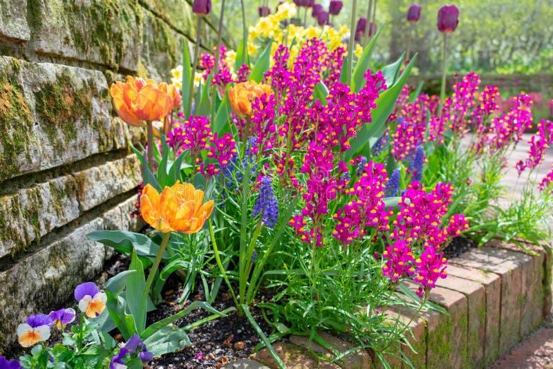 Jardín de la primavera después de la lluvia foto de archivo libre de regalías