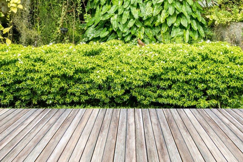 Jardín de madera del decking y de la planta fotografía de archivo libre de regalías