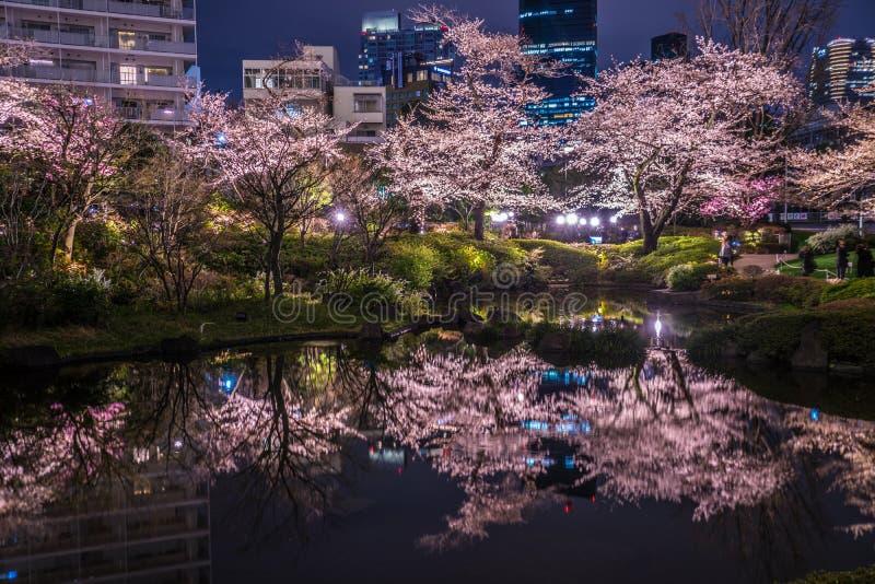 Jardín de Mohri de ir a ver las flores de cerezo en la noche Roppongi fotografía de archivo