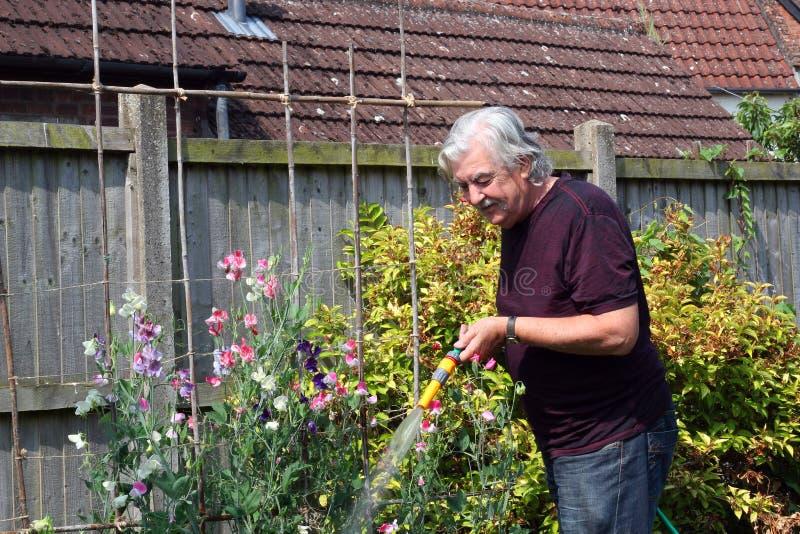 Jardín de riego con la manguera. imagen de archivo libre de regalías