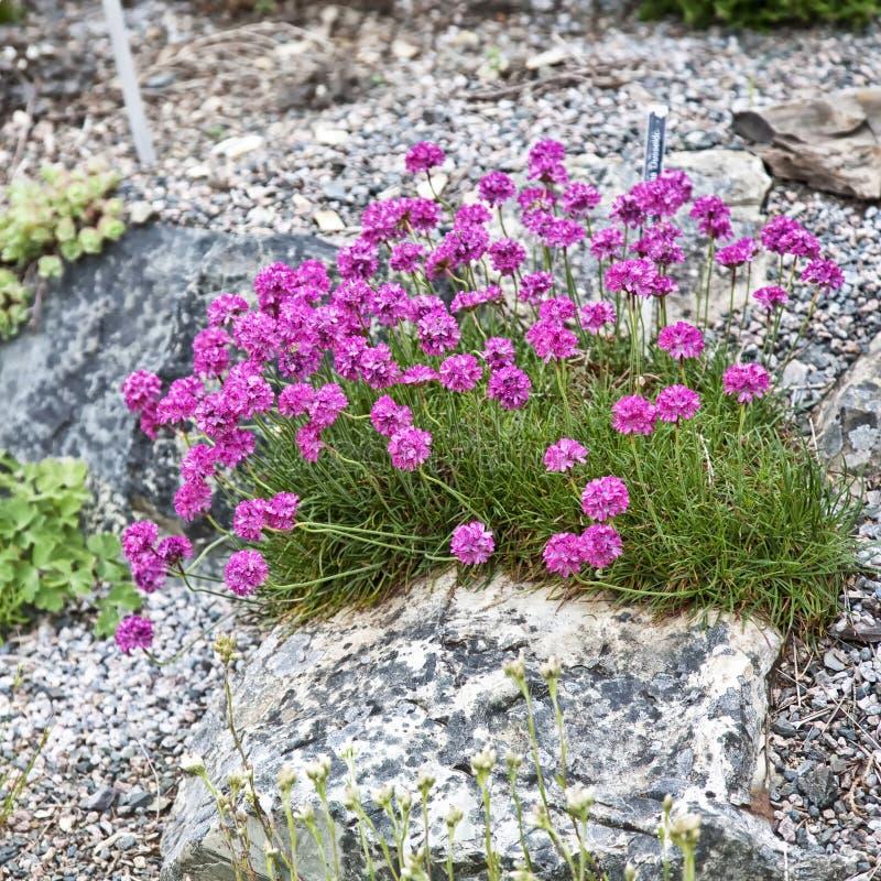 Jardín de roca alpestre fotografía de archivo