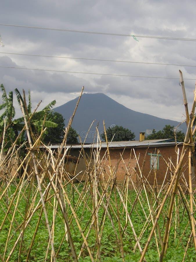 Jardín de Rwanda del volcán imágenes de archivo libres de regalías