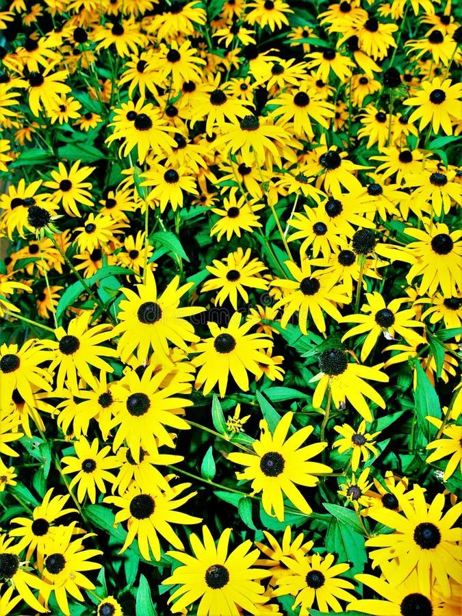 Jardín de Susan observada negro foto de archivo