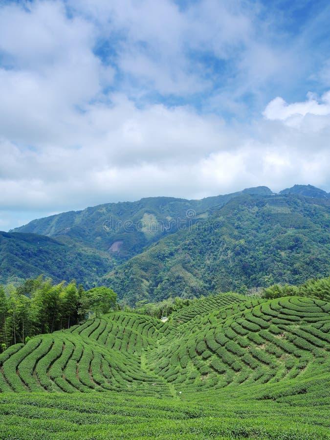 Jardín de té de Bakua imagen de archivo
