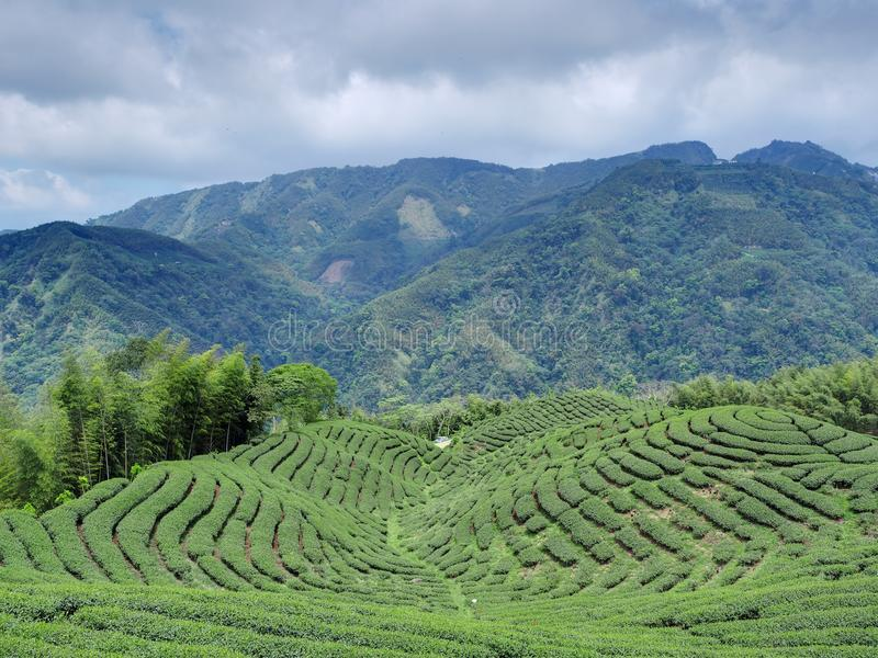 Jardín de té de Bakua fotos de archivo libres de regalías
