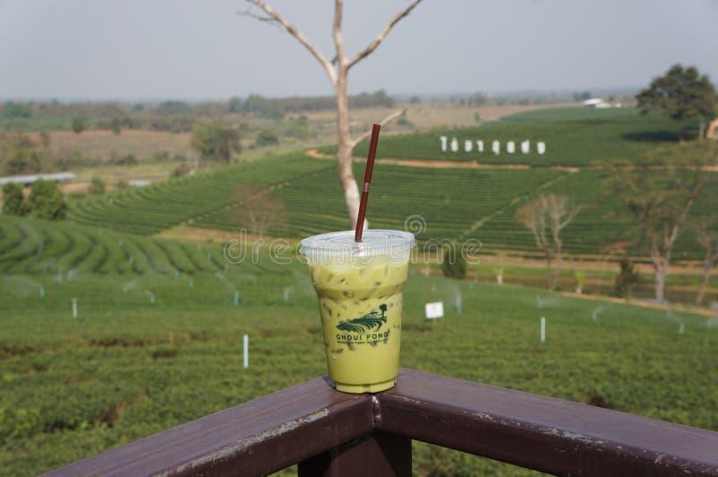 Jardín de té, campo verde, taza de té, fotografía de archivo