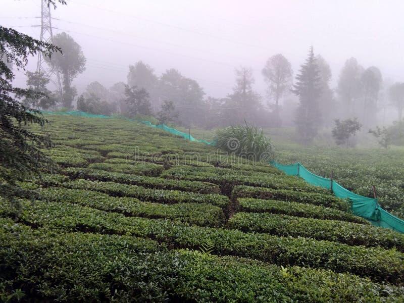 Jardín de té precioso Injoy imagenes de archivo