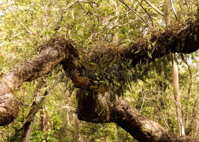 Jardín del árbol del helecho imagen de archivo libre de regalías
