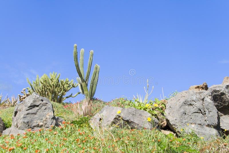Download Jardín del cacto foto de archivo. Imagen de coloreado - 7279414