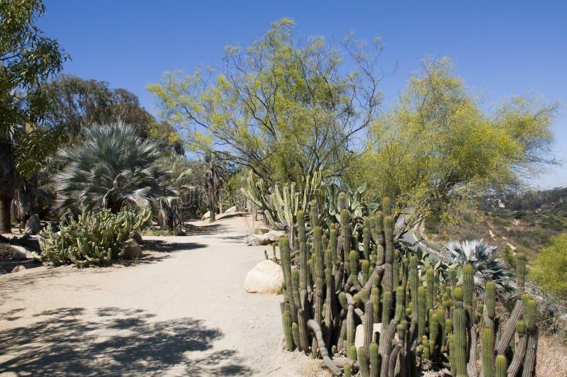 Jardín del cacto en San Diego fotografía de archivo libre de regalías