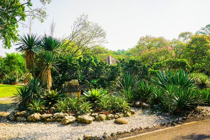 Jardín del cactus con la pequeña piedra del camino y de la roca en la tierra en Bogor Indonesia - foto fotos de archivo