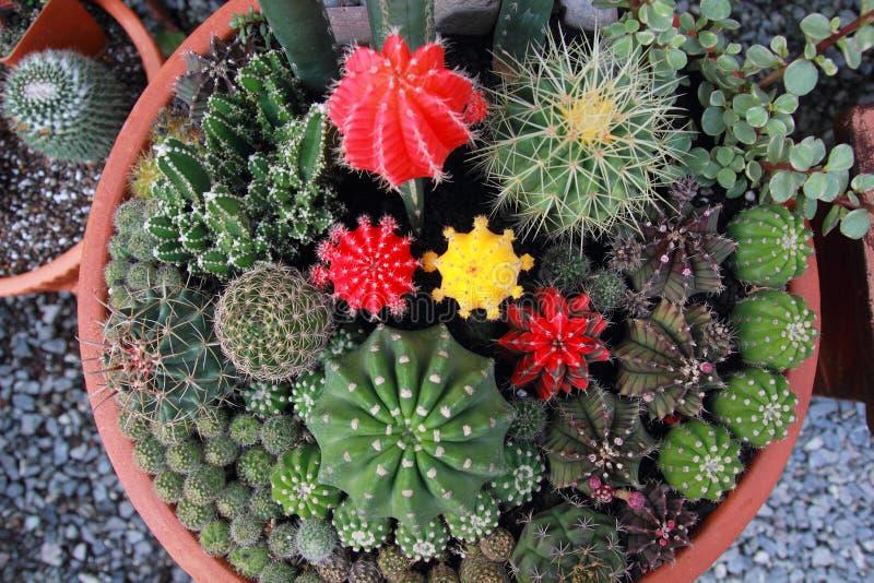 Jardín del cactus de la visión superior, foco de centro imagenes de archivo