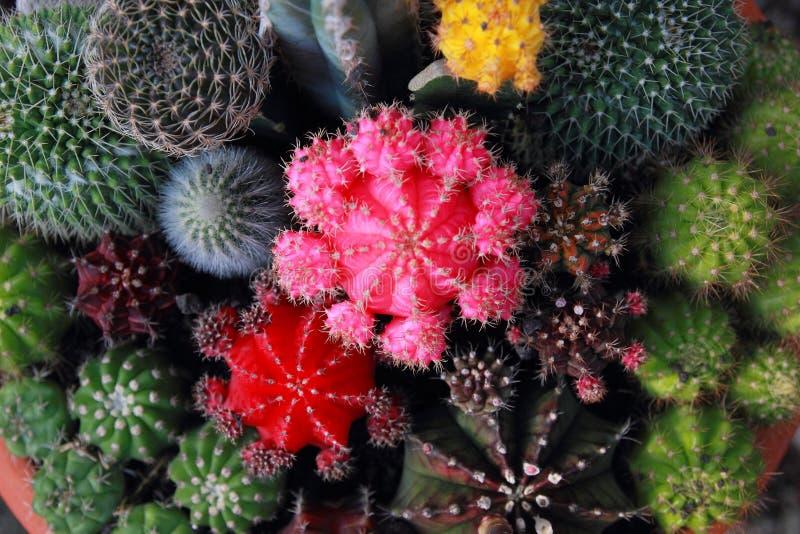 Jardín del cactus de la visión superior, foco de centro imagen de archivo