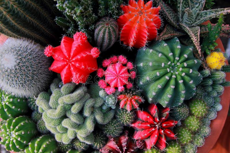 Jardín del cactus de la visión superior, foco de centro foto de archivo libre de regalías