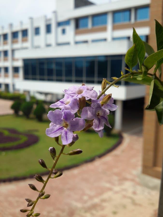Jardín del campus imágenes de archivo libres de regalías