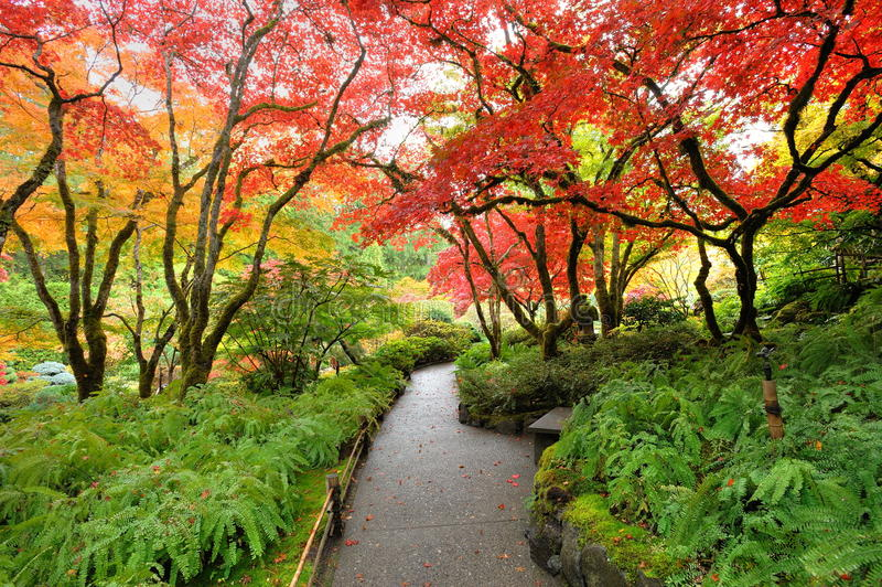 Jardín del japonés del otoño imágenes de archivo libres de regalías