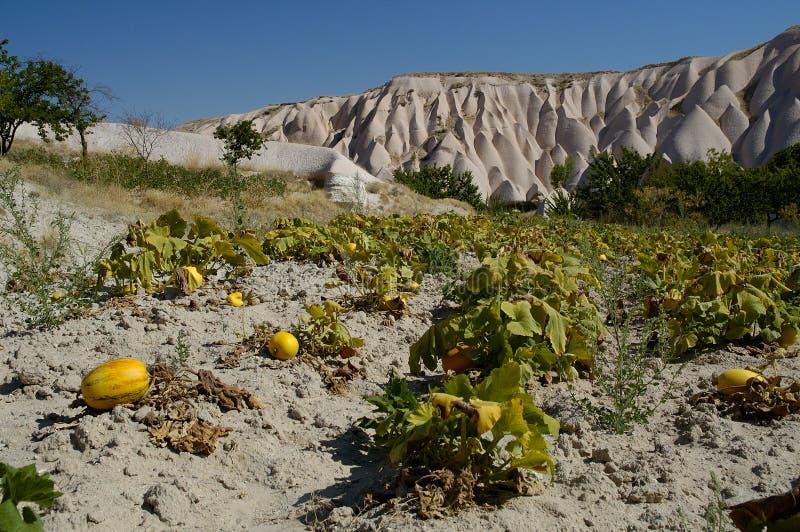 Jardín del melón/de la calabaza en el cappadocia II fotos de archivo libres de regalías
