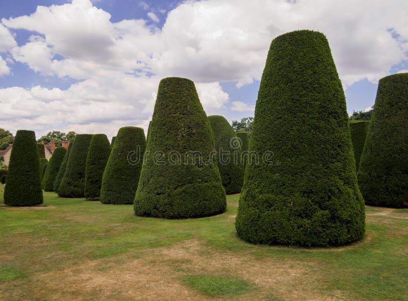 Jardín del Topiary del árbol del tejo foto de archivo libre de regalías