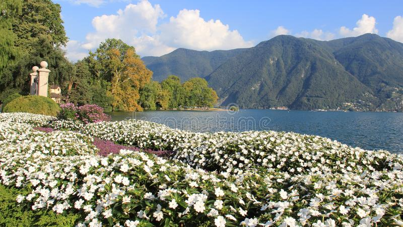 Jardín del verano en orilla del lago imagen de archivo