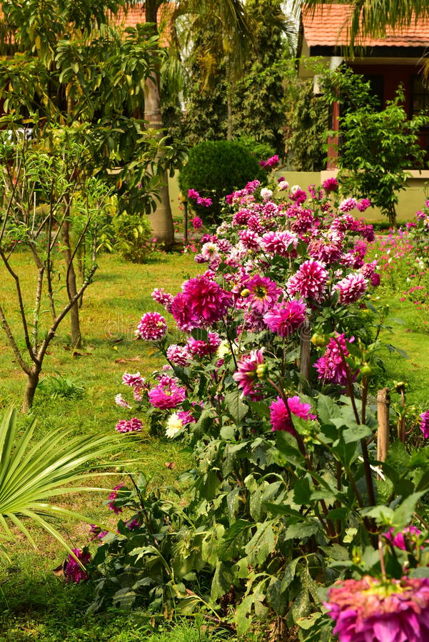Jardín en Chitwan, Nepal imagenes de archivo