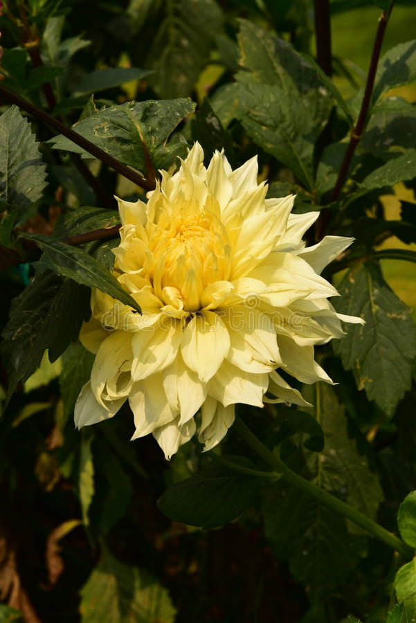 Jardín en Chitwan, Nepal fotos de archivo
