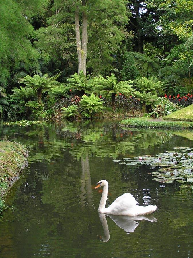 Jardín en el sao Miguel imágenes de archivo libres de regalías