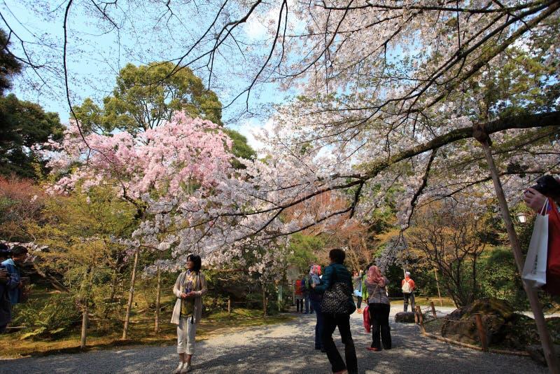 Jardín en el templo de Ryoan-ji foto de archivo libre de regalías