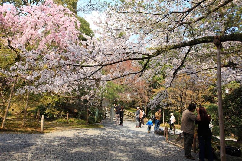 Jardín en el templo de Ryoan-ji foto de archivo
